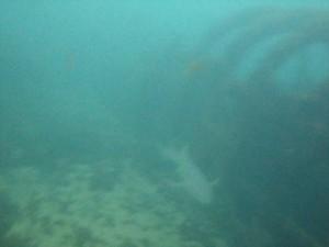 O encontro com o Tubarão