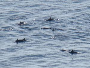 Grupo de Rotadores avistados do Mirante dos Golfinhos
