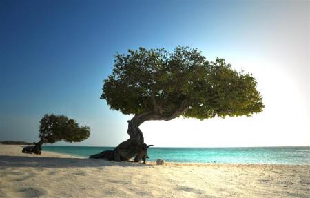 Árvores com troncos retorcidos pelos ventos
