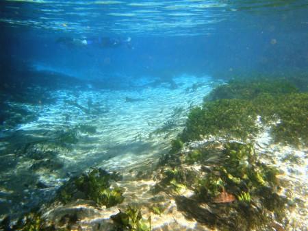 Flutuação no Rio Sucuri, Bonito - MS
