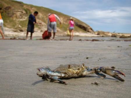 Um sobrevivente da pescaria