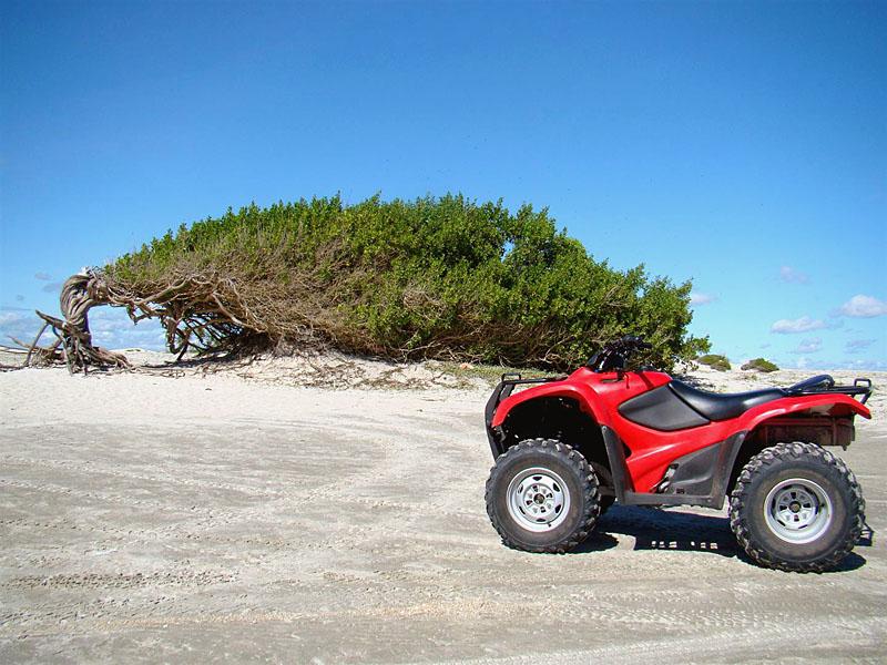A Árvore da Preguiça não resistiu a força dos ventos