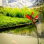 Peixes, flores, lago e azuleijos no IMS