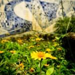 Flores, lago e azuleijos no IMS