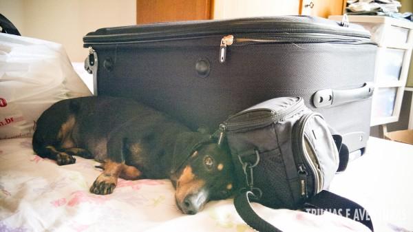 A Nina também queria ir na mala