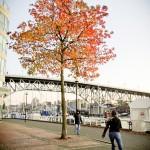 Uma das poucas árvores com folhas no inverno