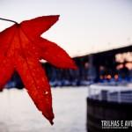 A famosa folha estrelada do Canadá