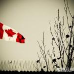 Bandeira canadense ao vento
