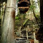 Treetop Adventure no Capilano Suspension Bridge
