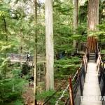 Uma das sete pontes do Treetop Adventure