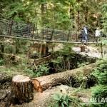 Pontes sob lagos e árvores