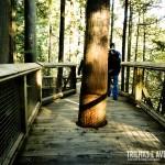 As árvores ultrapassam as pontes