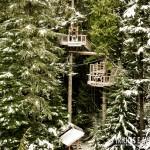As bases das tirolesas ficam no topo das árvores