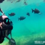 Diversos peixes acompanham o mergulho