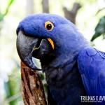 As araras azuis do Bird Land dão um show de simpatia
