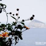 Flores! E ao fundo as famosas Ilhas Cagarras