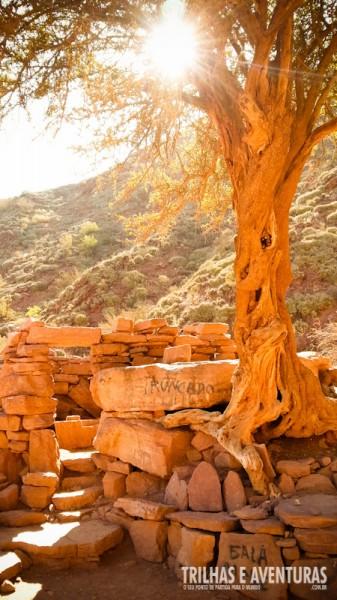 Ruínas e árvore retorcida
