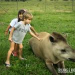 As antas são calmas e adoram receber carinhos. As crianças amaram!