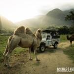 O passeio ao Safari do Portobello Resort é imperdível!