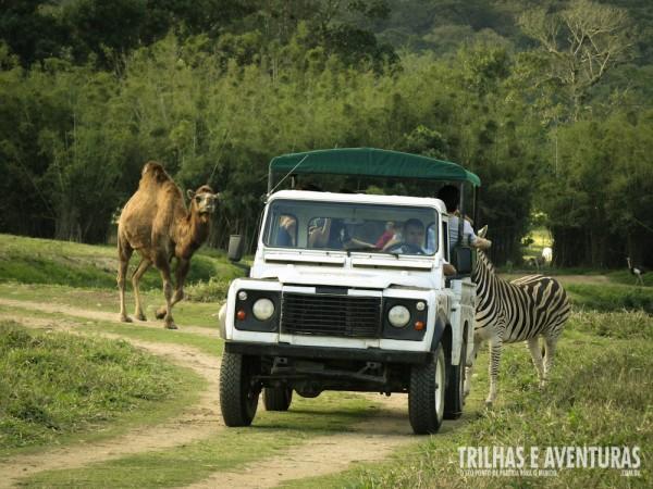 A integração com a natureza é total no safari do Portobello