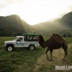 O Safari do Portobello Resort é simplesmente IMPERDÍVEL!