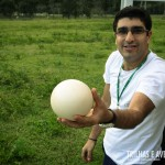 Olha o que achamos no meio da savana: um ovo de avestruz