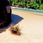 Praias desertas e selvagens esperam você no passeio de escuna