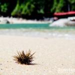 Um pequeno ouriço, uma praia de águas verdes e um barco. Perfeição!