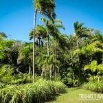 Palmital do Portobello Resort