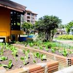 Pequena horta ainda em construção