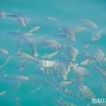 É possível mergulhar em diversos aquários naturais no passeio