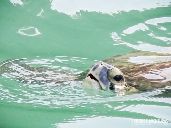 Uma das muitas tartarugas que vimos durante o passeio