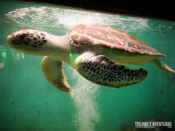 Aqui as tartarugas são reabilitadas para voltar para a natureza