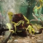 As crianças adoram o aquário de cavalo-marinho-amarelo