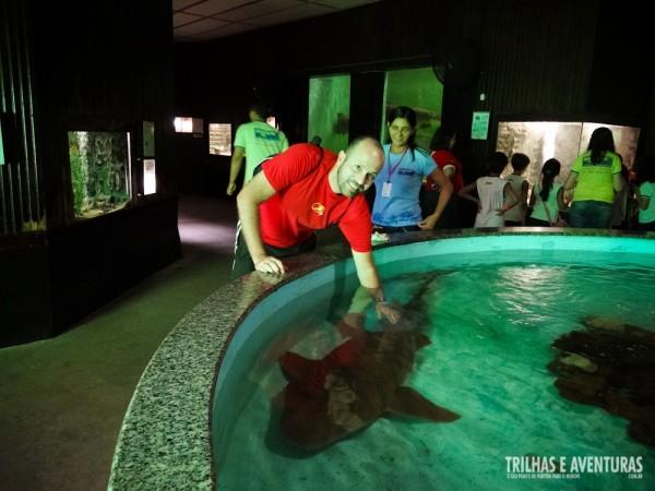 Experiência única: fazer carinho em um tubarão-lixa no Aquário de Natal