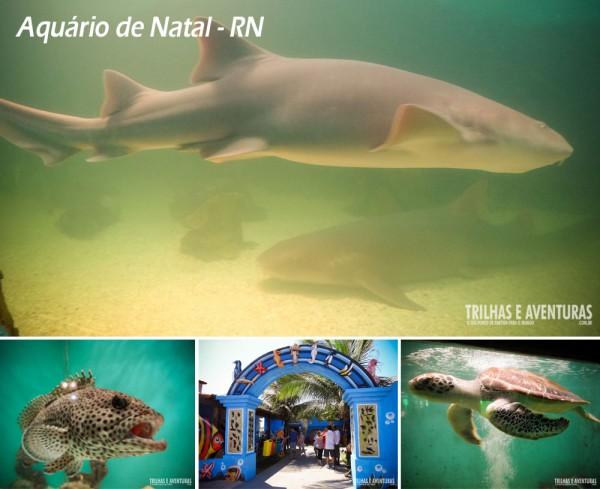 Aquário de Natal, vale a visita e fazer carinho no tubarão-lixa