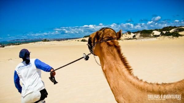 Um outro ângulo do passeio de dromedário nas dunas de Genipabu