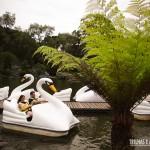 Pedalinhos do Parque do Lago Negro