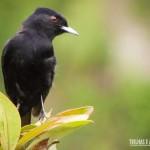 Pássaro apreciando a vista dos cânions