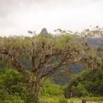 Árvores gigantes ficam pequenas perto dos paredões do cânion