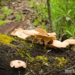 Cogumelos no Cânion Malacara