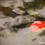 Uma simples folha na piscina natural no Cânion Malacara