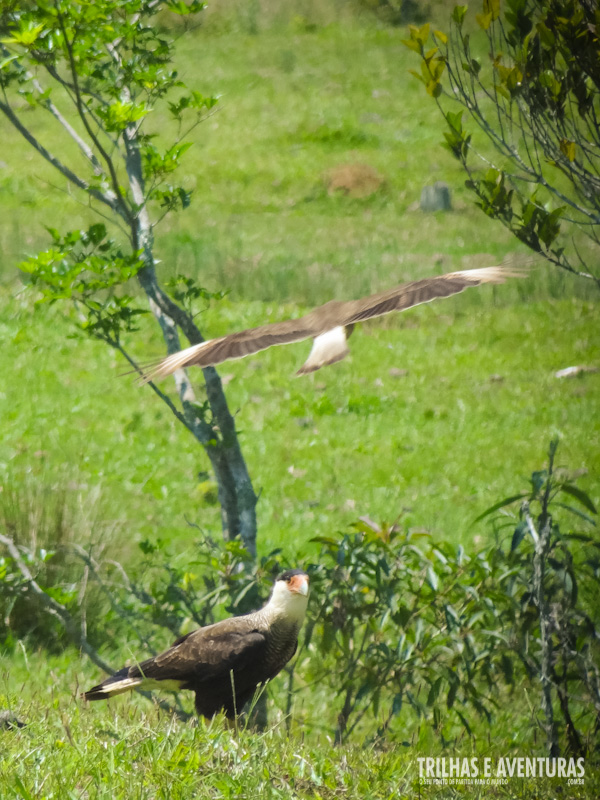 Rica fauna e flora da Serra do Faxinal ao alcance dos seus olhos