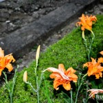 Lindas flores no hotel fazenda