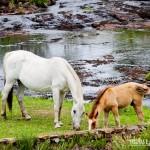 Cavalos na beira do rio do Parador Casa da Montanha
