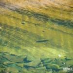 Rios transparentes perfeitos para um bom banho no Recanto das Bromélias