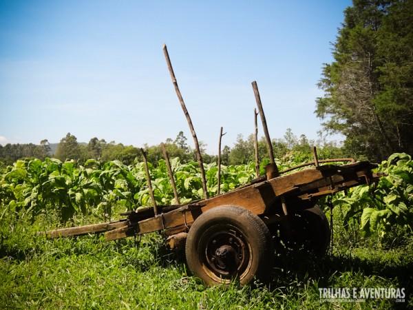 A velha carroça utilizada na plantação de fumo em Praia Grande (SC)