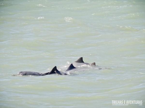 Uma família de golfinhos nos receberam dando um show!