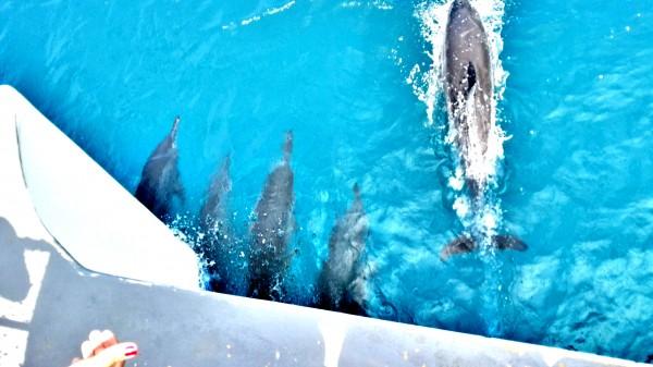 Encontro com os Golfinhos - Fernando de Noronha