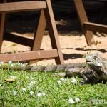 Um dos muitos visitantes do Ponto do Pirambu